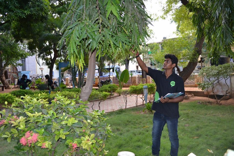Maram Madurai_classiblogger 5