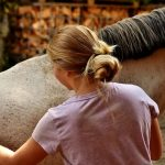 101 tips - All About Horse Care which a Beginner Should Know - classiblogger