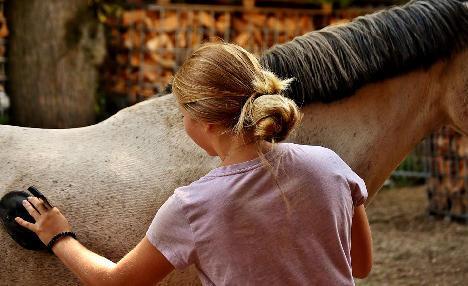 All About Horse Care which a Beginner Should Know